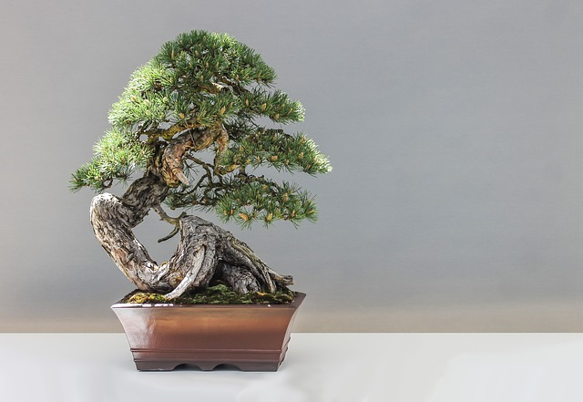 The Bonsai – how to create and maintain one